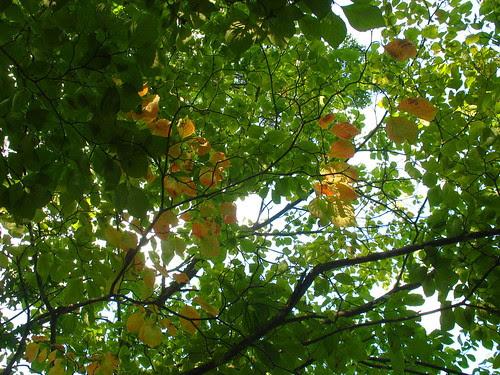 nature notes dogwood IMG_3106