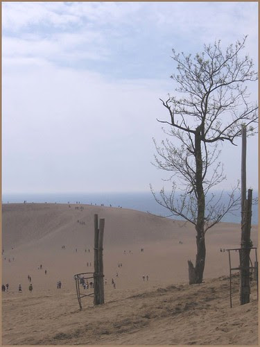 12 lone tree in the dunes