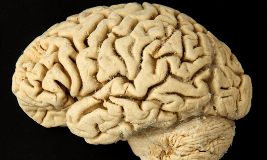 First almost fully-formed human brain grown in lab, researchers claim