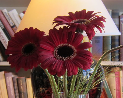 Uusi viikko, uusi kukka by Anna Amnell