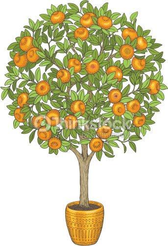 Mandarín árbol Dibujo A Mano Color Ilustración Arte Vectorial