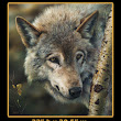 Register Now - Painting A Wolf - Wildlife Paintings & Prints For Sale By Denis Mayer Jr.