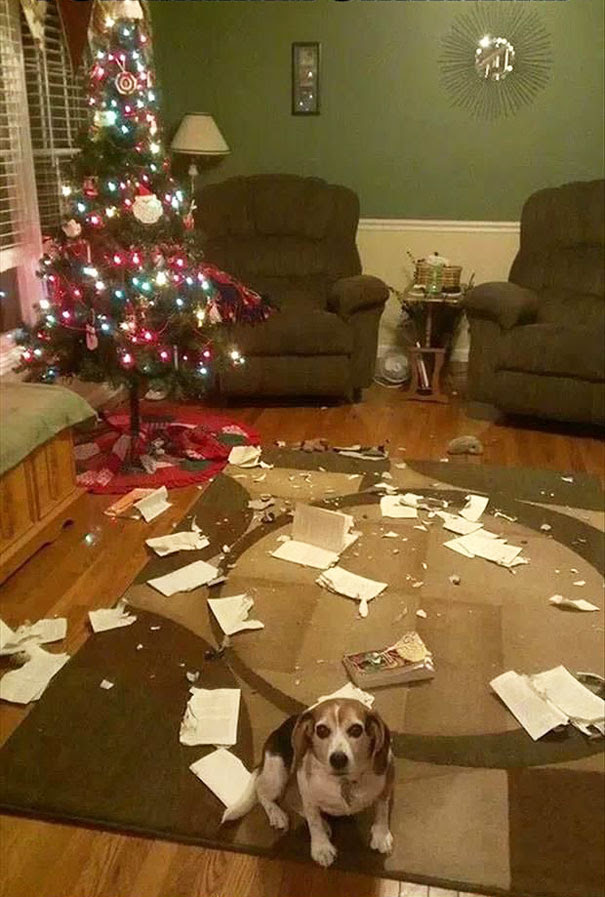 It wasn't me. I swear!