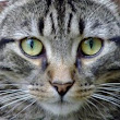 Cats Causing Extinction? Good Dog! Coaching & Pet Care Blog, Pet Sitting