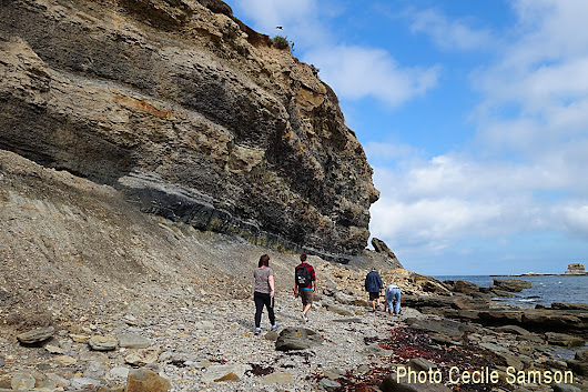 Cape Breton Photo of the Week: Cape Breton Fossil Centre