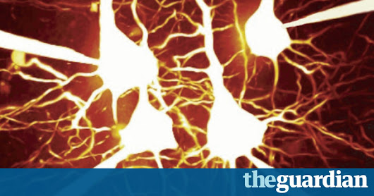 Ambitious neuroscience project to probe how the brain makes decisions | Science | The Guardian