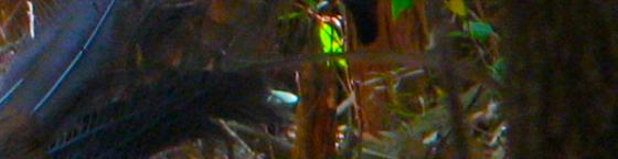 Lyre3