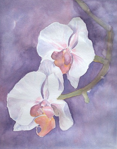 Orchid Study by teshionx