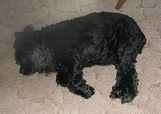 Nap Dog