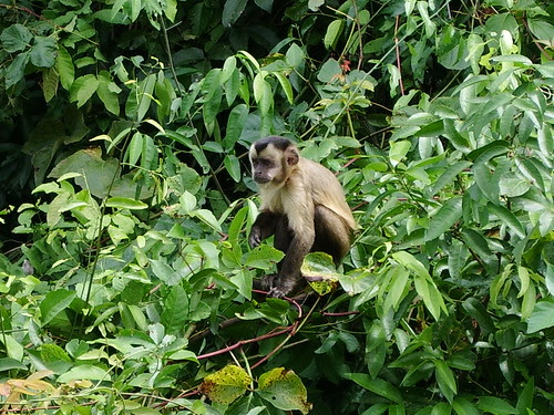 Squirrel Monkey!