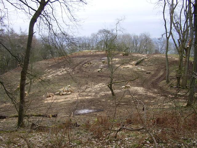 Soil Disturbance and Brash Fires on Midsummer Hill Hillfort