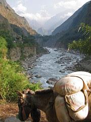 Kali Gandaki Donkey