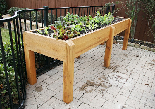 How Elevated Gardens Beds are Better for Your Back