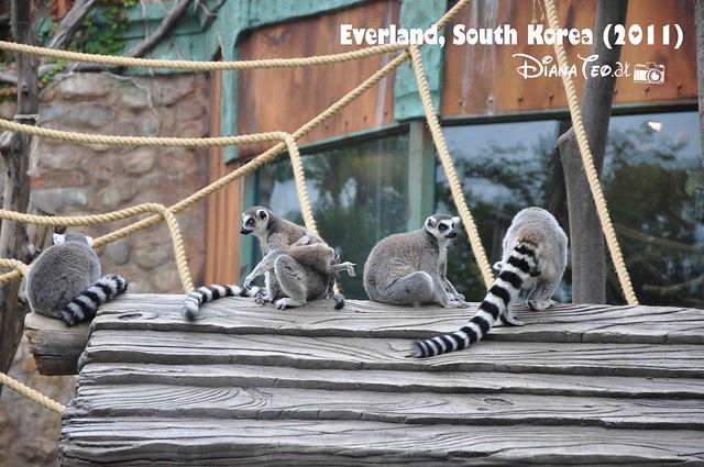 Everland - ZooTopia 07