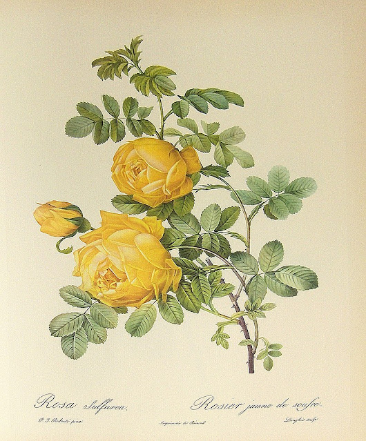 The Allure of Yellow Roses in The Age of Innocence