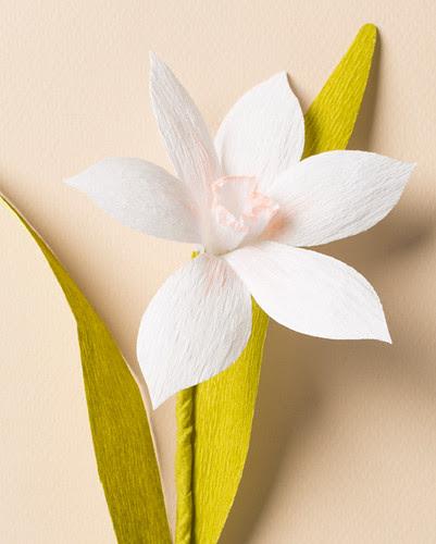 crepe-paper-narcissus