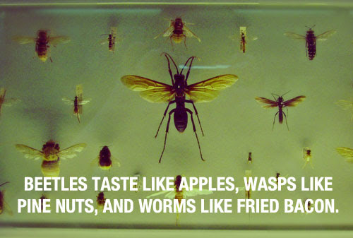 Amazing fact about wasps