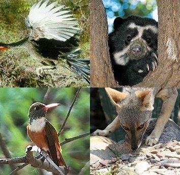 fauna-chaparri