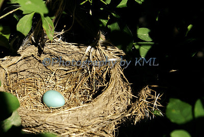 a nest with a blue robin's egg