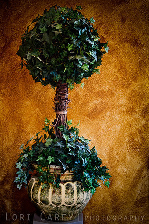Potted Ivy Still Life