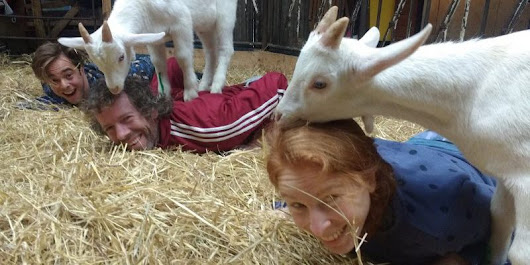 Goat yoga classes are being held in Amsterdam