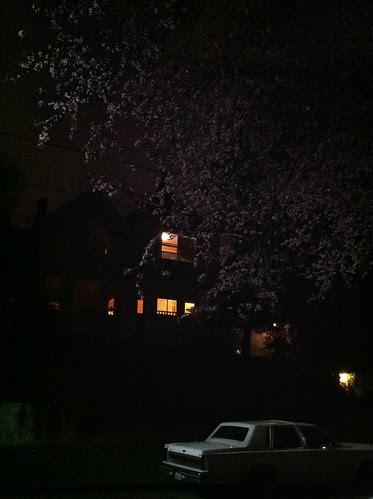 spring evening 2011