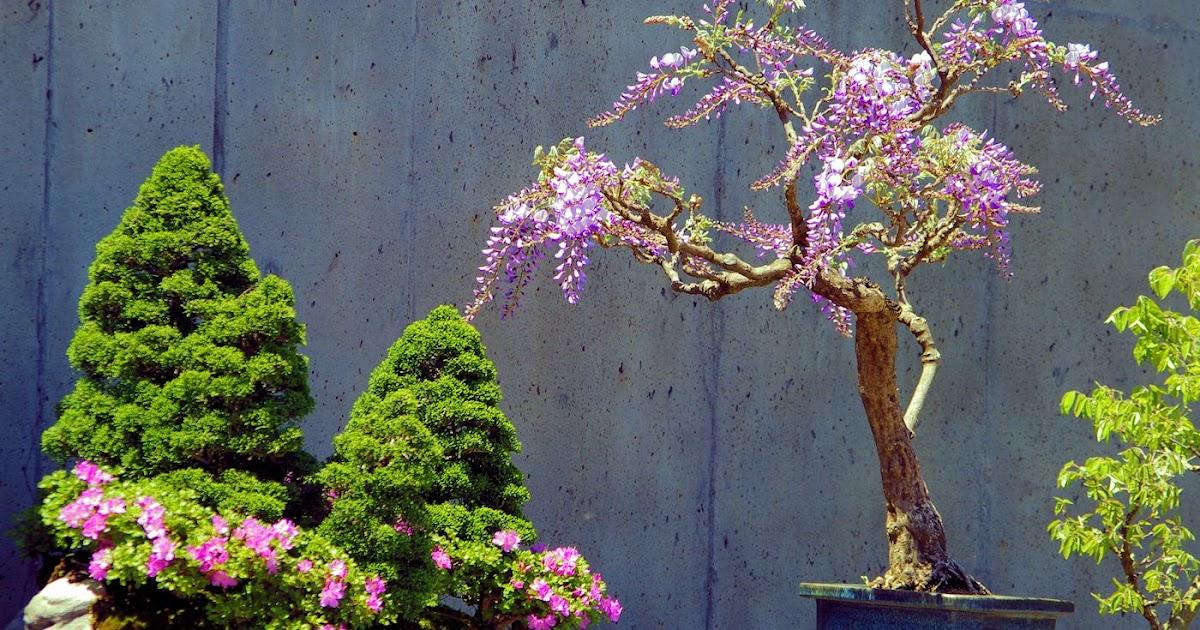 20 Cozy Bonsai Tree Charlotte Nc Pictures Bonsai Tree