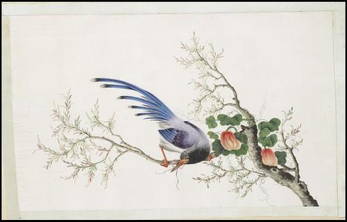 Bird Album c
