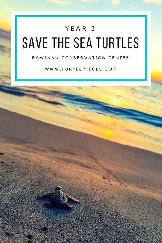 Save the Sea Turtles Year 3 (Pawikan Conservation Center)