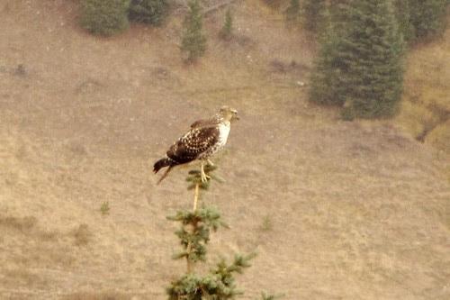 IMG_6380a_Osprey_Rocky_Mountain_National_Park