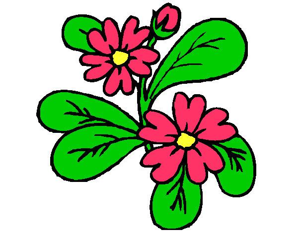 Dibujo De Flor Nerea Pintado Por Cecy 2255 En Dibujos Net El Dia 07