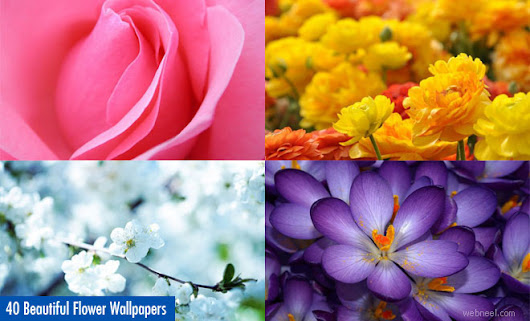 40 Beautiful Flower Wallpapers for your desktop - HD