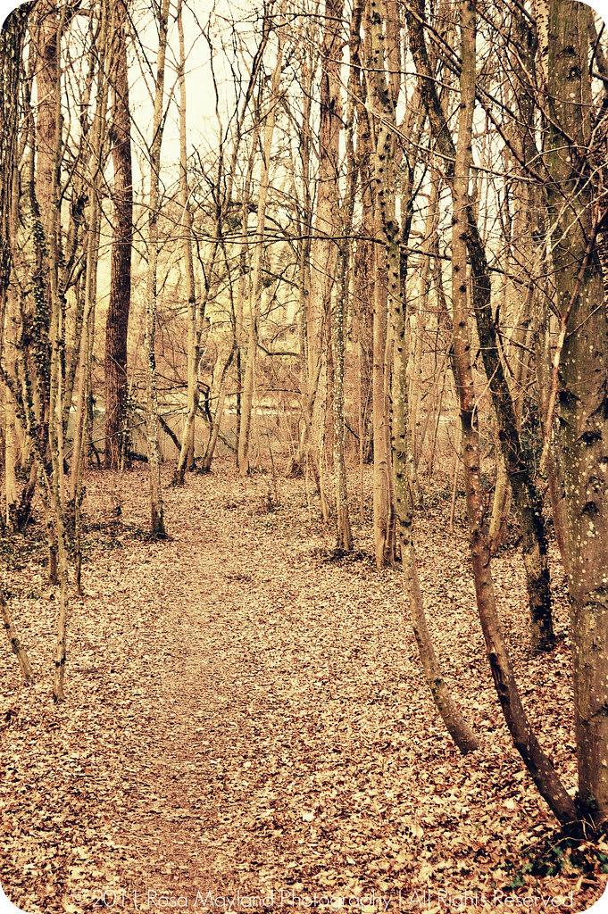 Spring Forest Arve 1.1 bis