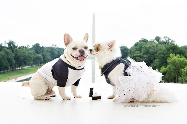 Sebastian, a French bulldog, and Luna, a Pomeranian, are the definition of puppy love.