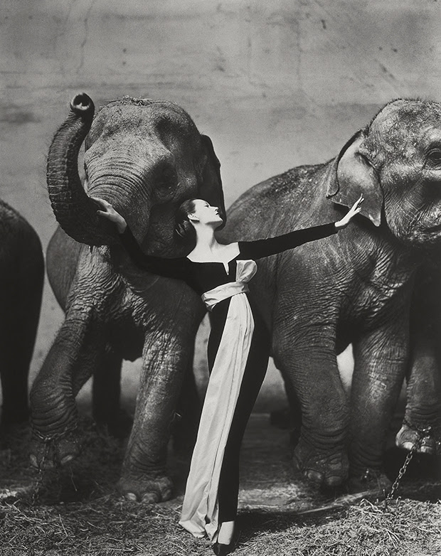 Dovima with Elephants, 1955 - Richard Avedon, from the Photography Book