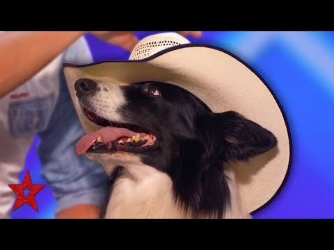 Dancing Cowboy DOG AMAZES The Audience On America's Got Talent 2019! | G...