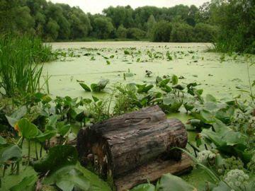 Картинки по запросу фото болото