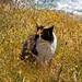 kittybythesea