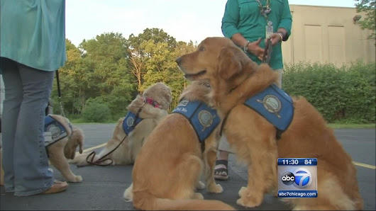 Chicago area comfort dogs headed to Dallas |