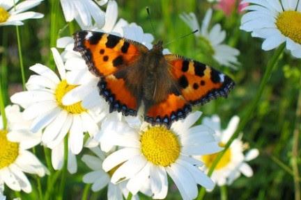 farfalla sogni
