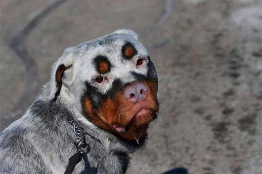 These 33 Dogs With The Most Unique Coats On Earth Took My Breath Away. My Favorite Is #7!