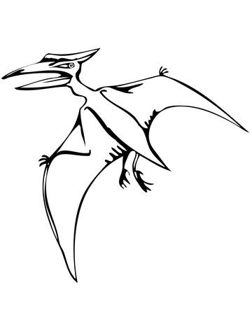 Dibujo De Reptil Volador Pteranodonte Para Colorear Dibujos Para
