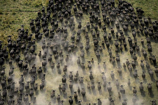 The global collapse of the great animal migrations