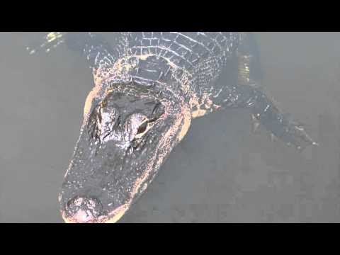 Video Gallery - Airboat In Everglades - Miami