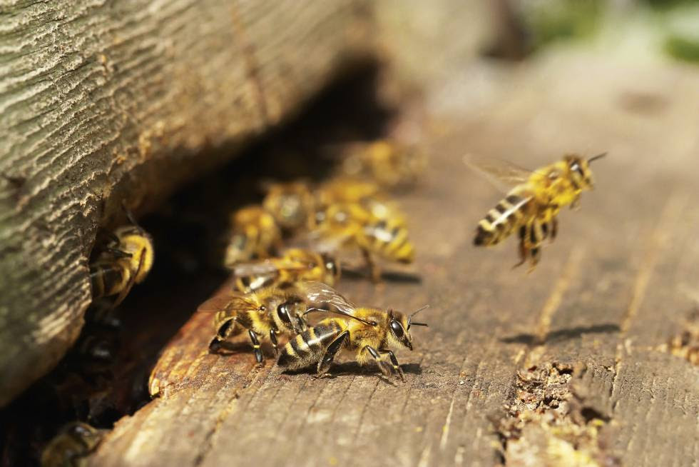 Bees are vital to crops like alfalfa, almonds, cucumbers and strawberries.