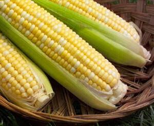 Freezing corn on the cob