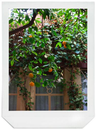 deux-tours-orangers