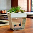 Pet outlet shop: Fish & Aquatic Pets: Back to the Roots AquaFarm v2 (Packaging May Vary)