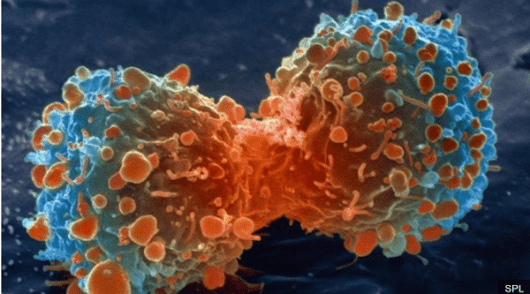 A Handful of Genetic Changes Make Cancer