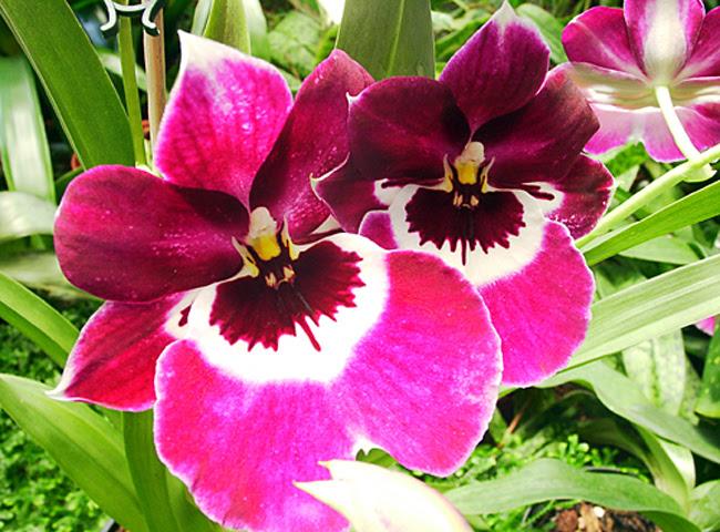 Jardim Orquídea
